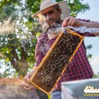 پیشبینی برداشت ۱۰۰ تن عسل در شهرستان بردسکن