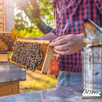 جوانی که با تولید عسل چرخ زندگی روستا را به حرکت درآورد