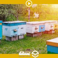 ویدئو: وضعیت زنبورداری ایران خوب نیست