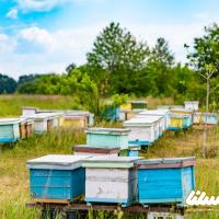 پرورش ۷۵۰۰ کندوی عسل در باغهای درگز