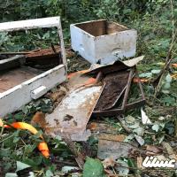 خرسهای عسلدوست چالش زنبورداران شاهرودی