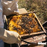 سرشماری زنبورستان های سمنان انجام نخواهد شد