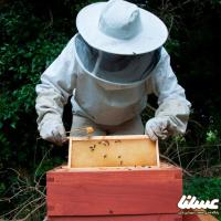 تولید سالانه ۱۸۵۷ تن عسل حاصل زحمت ۷۴۸۹ زنبورستان در کردستان است