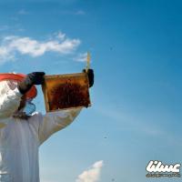 کاهش ۵۰ درصدی تولید عسل در خوزستان زنگ هشداری برای زنبورداری در این استان