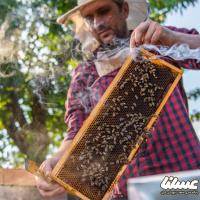 برداشت عسل در مراغه آغاز شد