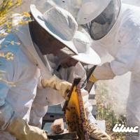 لغو سرشماری زنبورستان های کرمانشاه به علت کرونا