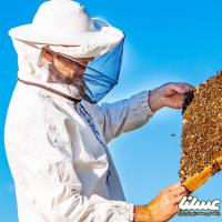 احتمالا 80 تن عسل از شهرستان دلفان برداشت می شود