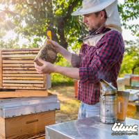 میزان عسل تولید شده در استان اردبیل نزدیک به 7.5 تن است