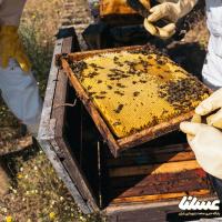 سرشماری از کلنی های زنبور عسل در مازندران لغو شد
