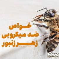 آشنایی با خواص ضدمیکروبی زهر زنبور عسل - قسمت اول: خاصیت ضد قارچ زهر زنبور