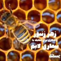 آیا نیش زنبورعسل می تواند بیماری لایم را درمان کند؟