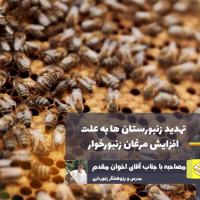 افزایش مرغان زنبورخوار بقای زنبورستانها را تهدید میکند