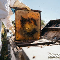 صنعت زنبورداری به دارو و دامپزشک تخصصی نیاز دارد