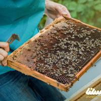 دولت باید بازار آشفته داروهای زنبورداری را مدیریت کند/جلوی تولید داروهای ارگانیک زنبورداری گرفته نشود