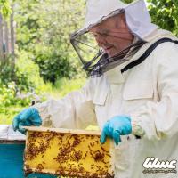 زنبوردار بهعنوان رکن اصلی صنعت بزرگ زنبورداری فراموششده است