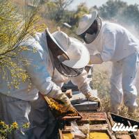 افزایش فعالیت صنفی پایه پیشرفت صنعت زنبورداری است