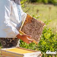 بانک کشاورزی و مراجع دولتی برای ایجاد کارخانه عسل اشن همکاری کنند