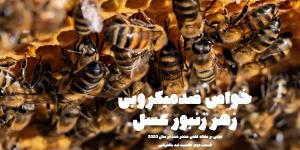آشنایی با خواص ضدمیکروبی زهر زنبور عسل - قسمت دوم: خاصیت آنتی باکتریایی زهر زنبور