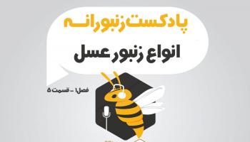 پادکست زنبورانه - فصل 1 قسمت 5 - انواع زنبورها