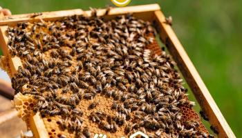ویدئو: 21 روز اول زندگی زنبورها در تد